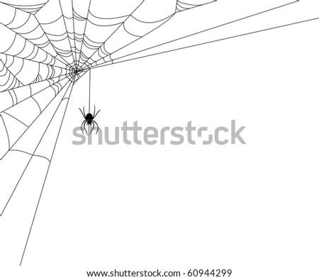 Spiderweb and spider on white background
