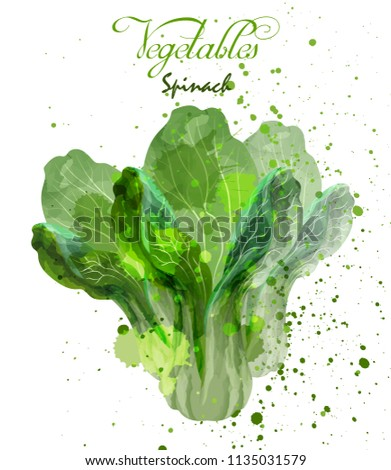 stock-vector-spinach-salad-leaves-watercolor-vector-delicious-colorful-designs