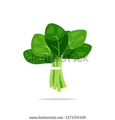 Spinach vegetable vector isolated Сток-фото ©