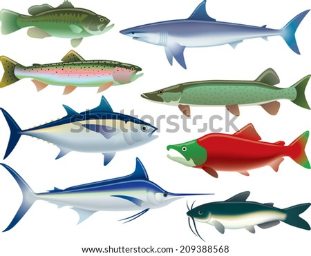 Sport Fish. Illustrations of fish that are caught for sport as well as for food.