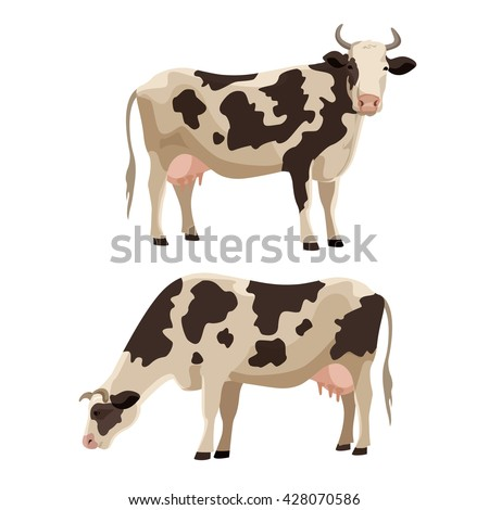 spotted cow vector illustration
