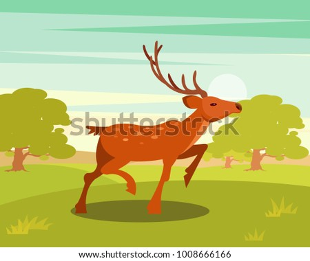 spotted deer with antlers  wild