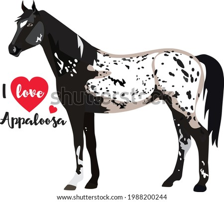 spotted horse with the