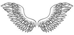 Spreaded wings, symbol of freedom, vector