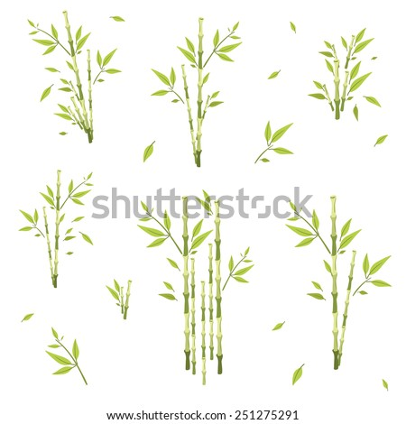 sprigs of bamboo of different