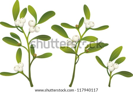 Sprigs of mistletoe