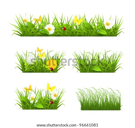 Spring and summer grass set, vector