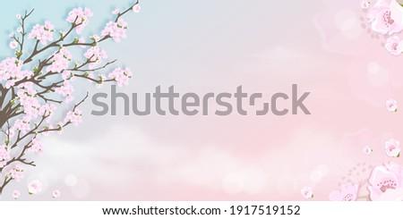 spring apple blossom on blue