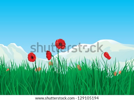 Spring at mountains. Red spring poppies and green grass on background with mountains.