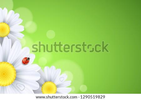 spring background ladybug