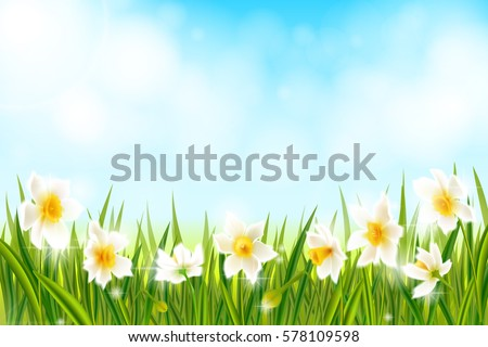spring background with daffodil