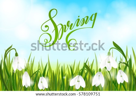green grass blue sky flowers. Spring Background With Galanthus Snowdrop Flowers, Green Grass, Swallows, Lettering And Blue Grass Sky Flowers