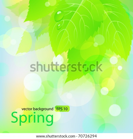 Spring  background  with green leaves. Vector EPS 10