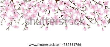 spring banner the pink sakura