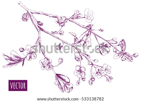 spring blossom  bloom   branch