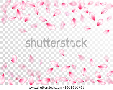 spring blossom isolated petals