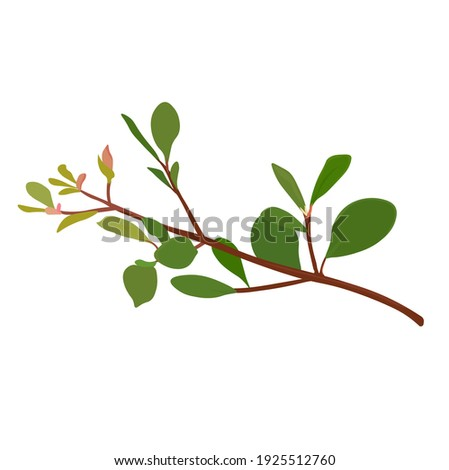 spring buds and leaves on a