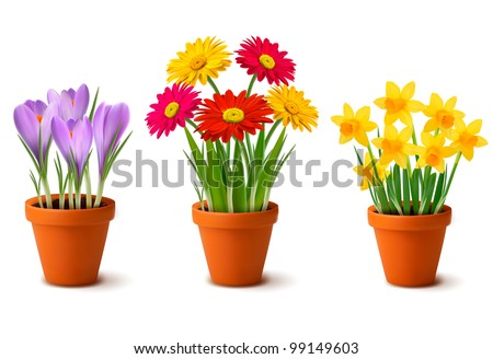 Flower Containers on Spring Colorful Flowers In Pots Vector   99149603   Shutterstock