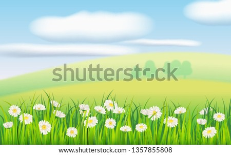 spring field of flowers of