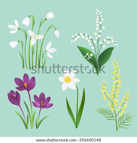 spring flower set snowdrops