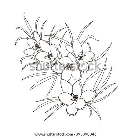 Spring Flowers Black And White Bouquet Vector Illustration Ez Canvas