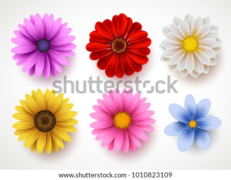 spring flowers colorful vector