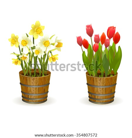spring flowers daffodils and