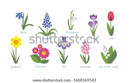 spring flowers set crocus