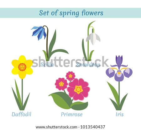 spring flowers set scilla
