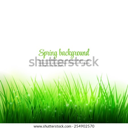 spring grass natural background