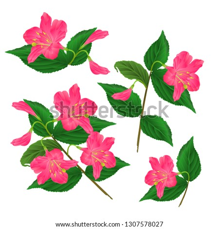 spring pink flower decorative