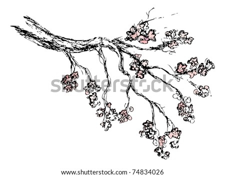 How To Draw A Cherry Blossom Tree In Pencil How to draw a cherry blossom