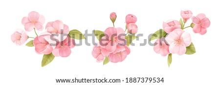 spring sakura cherry blooming