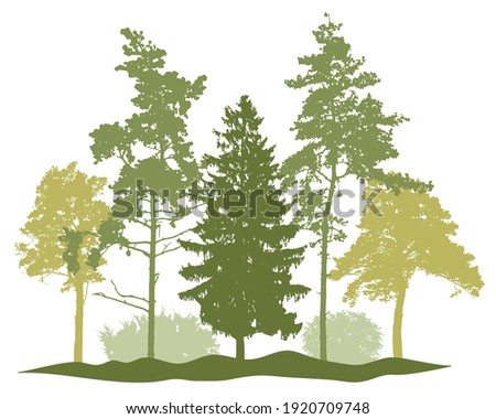Spring season, silhouette of spruce trees, pine, bush, other trees. Beautiful nature, woodland. Vector illustration