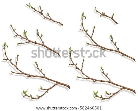 spring tree branch with buds