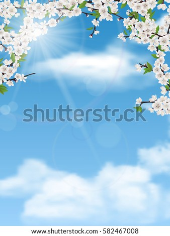 spring tree branches with