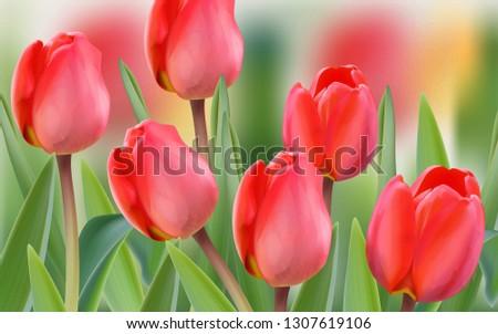 spring tulip flowers field