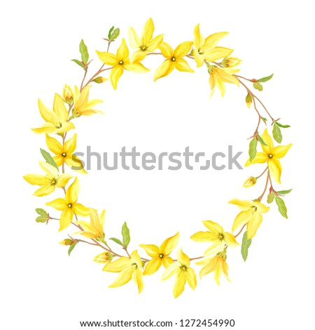 Spring wreath with blossoming yellow flowers and green leaves branches Forsythia. Vector tender illustration on white background in watercolor style.