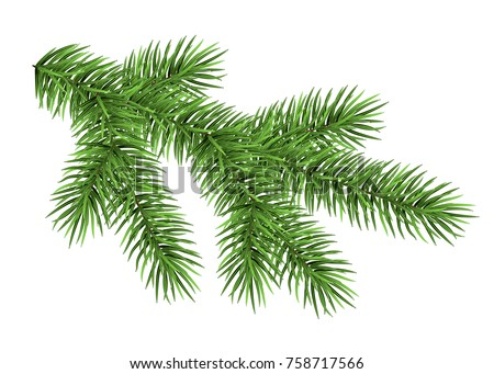 Spruce branch isolated on white background. Green fir. Realistic Christmas tree. Vector illustration for Xmas cards, banners, flyers, New year party posters.