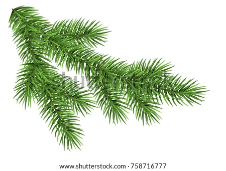 Spruce branch isolated on white background. Green fir. Realistic Christmas tree. Vector llustration for Xmas cards, New year party posters.