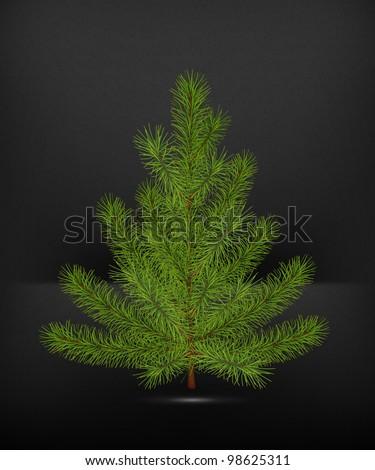 Spruce, high-quality vector