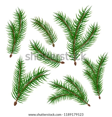Spruce tree branches set. Vector evergreen realistic fir, pine tree elenents with green needles. Natural forest plants sprigs for christmas, new year holiday decorating, greeting cards, banners design