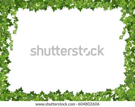 square decorative frame of ivy
