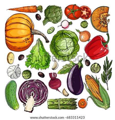 Square of colored vegetables.  Fresh food. Pumpkin, Cabbage, Blockley, kohlrabi, cauliflower, Brussels, beets, asparagus, corn, garlic, tomato line drawn on a white background. Vector illustration. #683311423