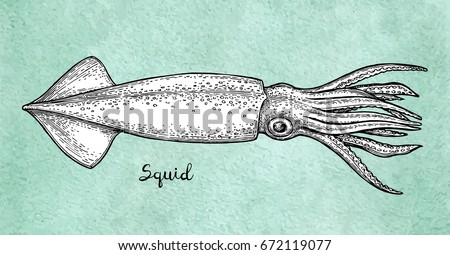 Squid ink sketch on old paper. Watercolor background. Hand drawn vector illustration. Retro style.
