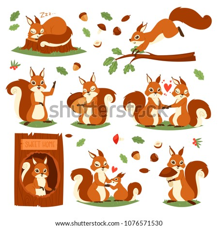 squirrel vector cute animal