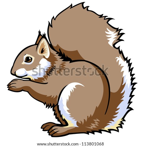 squirrel,vector,side view image isolated on white background