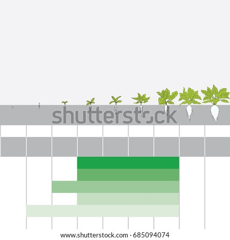 stage of grain growth, illustration, vector, Sugar beet