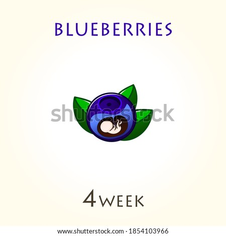 Stages of development of pregnancy, the size of the embryo for weeks. Human fetus inside the uterus. 4 week of 42 weeks of pregnancy. Vector illustrations blueberries