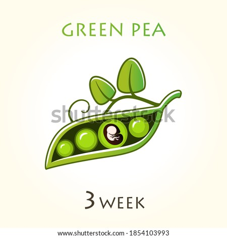 Stages of development of pregnancy, the size of the embryo for weeks. Human fetus inside the uterus. 3 week of 42 weeks of pregnancy. Vector illustrations green pea